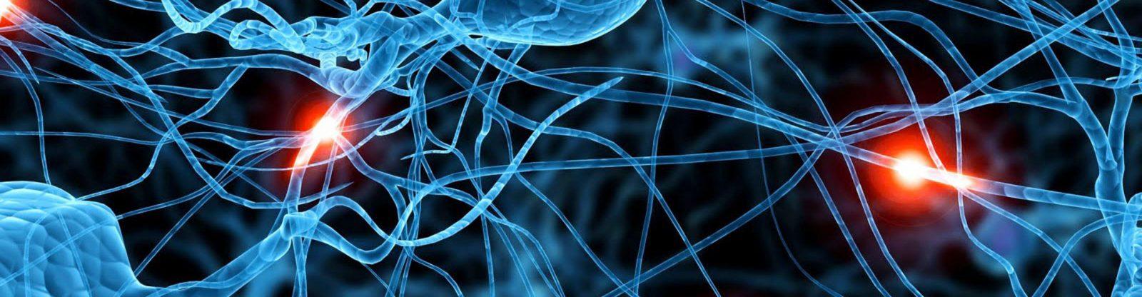 neurone-sinsec